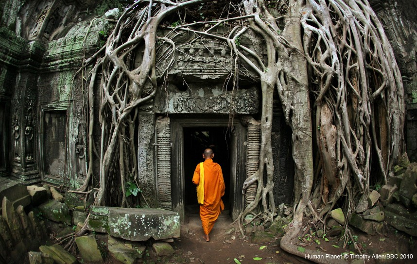Angkor, Cambodia. A monk entering a temple covered in strangler figs.