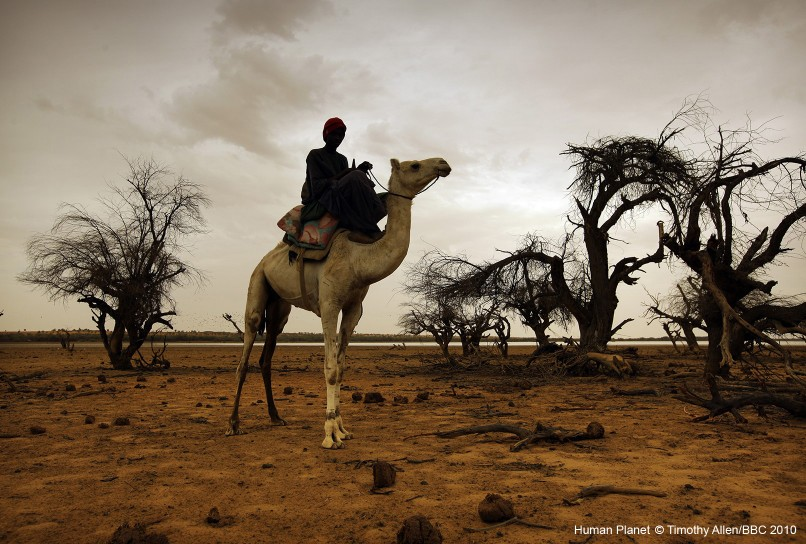 Sahel Desert, Mali. Young Mamadou is responsible for finding water for his herd.