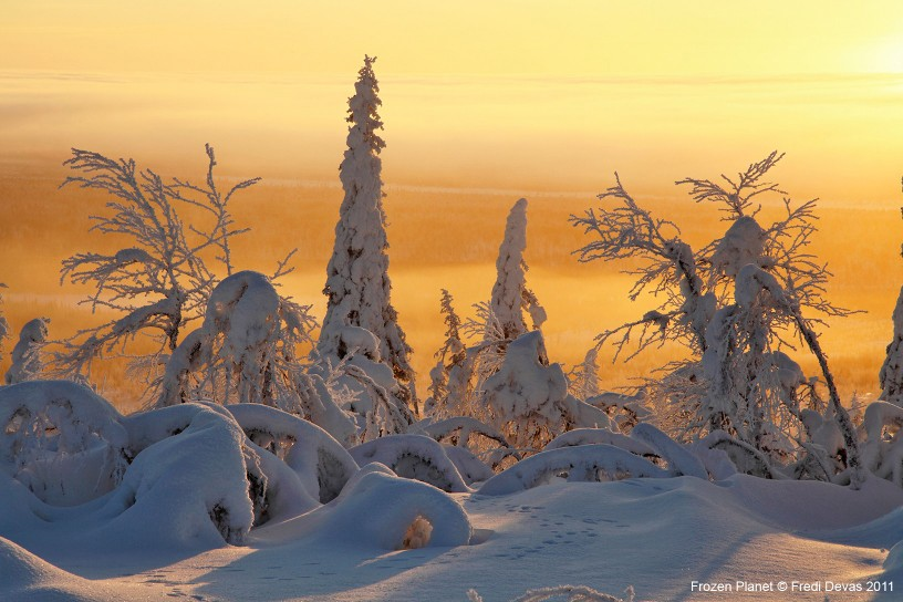 The taiga in Finland is the greatest forest on Earth, containing at least a third of all the world's trees.