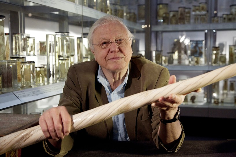 David Attenborough's Natural Curiosities S1