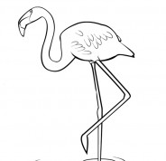 Colour in Flamingo