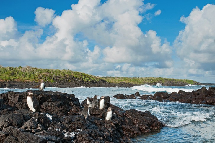 The Galapagos penguin is living proof that animals can adapt to unlikely new habitats © BBC NHU 2016