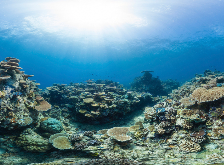 Coral reefs cover just 0.1 percent of the ocean floor while supporting about 25 percent of all marine life (Credit: The Ocean Agency / XL Catlin Seaview Survey)