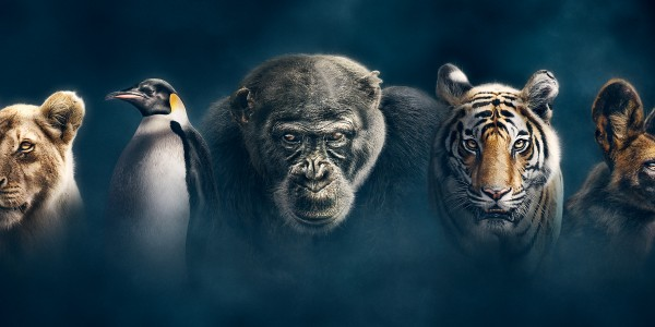 Quiz: Which #Dynasties family do you belong to? | BBC Earth