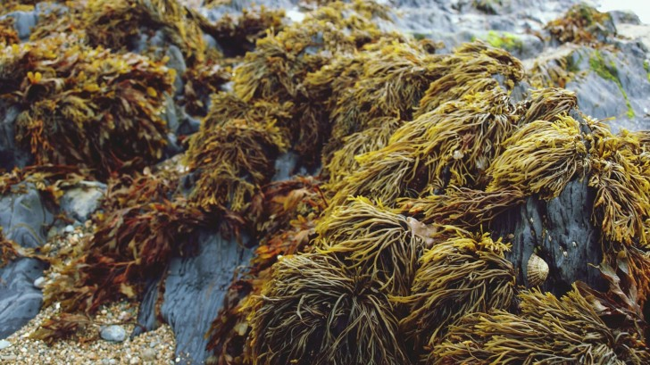 Seaweed is thought to be a new solution to the excessive use of plastic for packaging foodstuffs © David Fenton/EyeEm/Getty